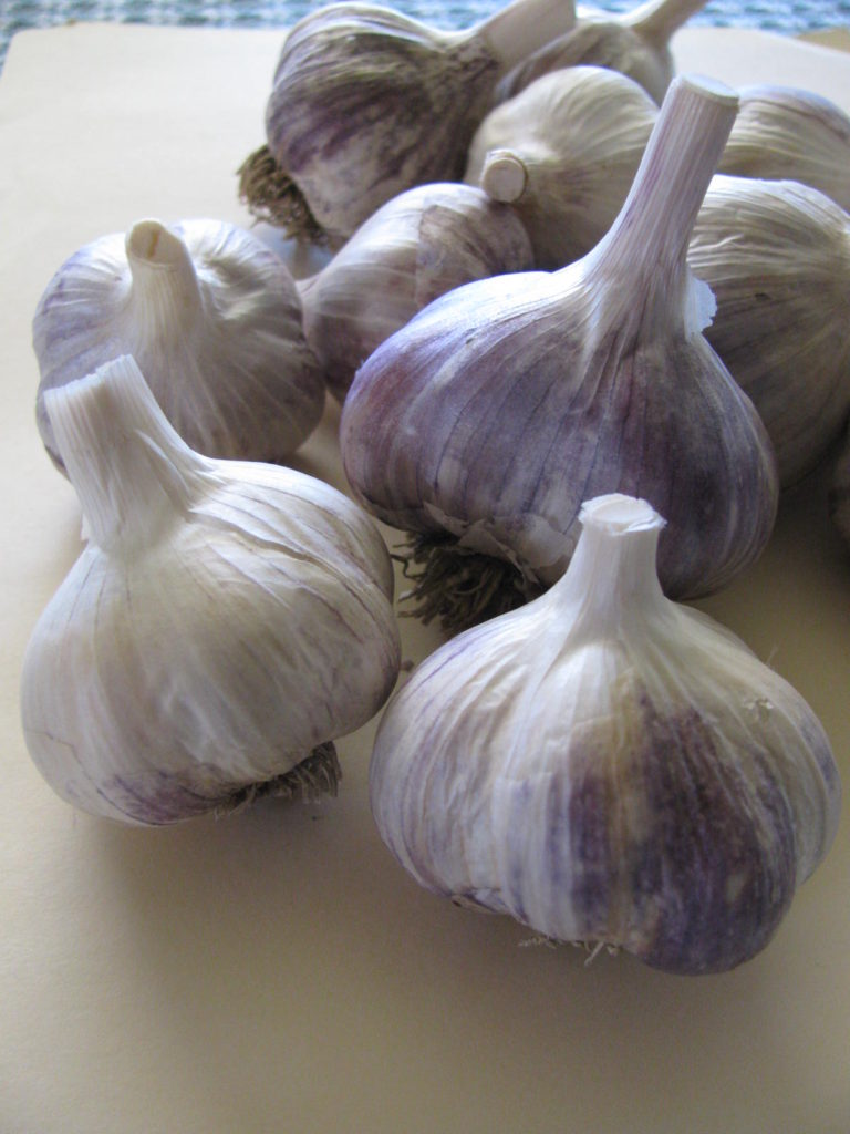 Canadian garlic, BC garlic, organic garlic, naturally grown garlic, Tibetan, Yugoslavian Porcelain, Music, Russian Red, garlic