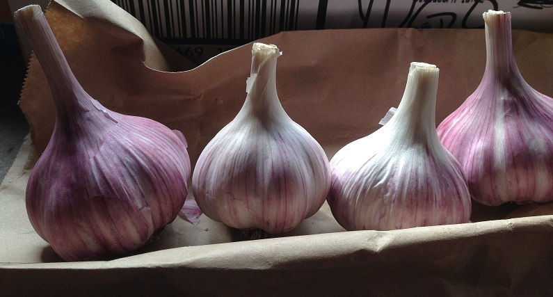 Tibetan Hardneck Garlic Canada grown